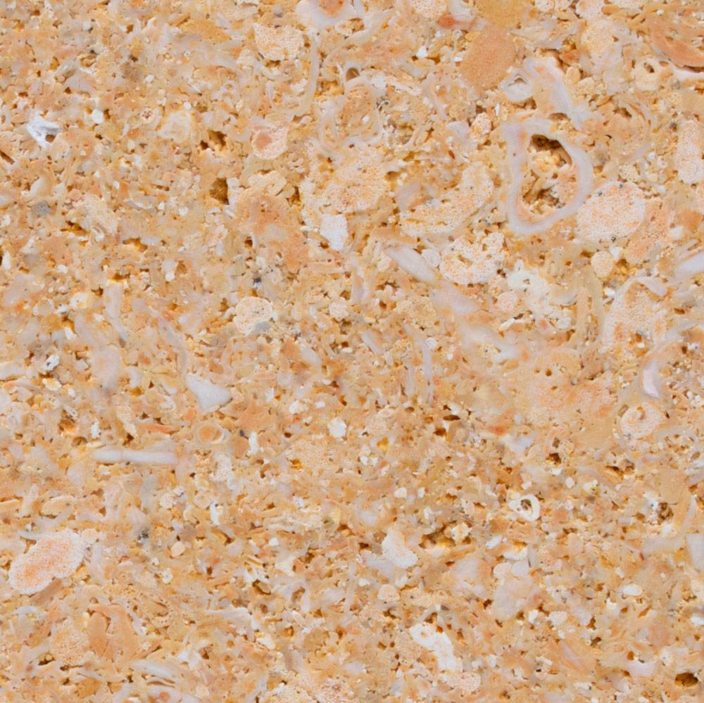AMARILLO-fosil-detalle